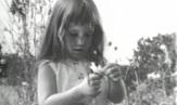 Ixotype - Blog - Daisy spot