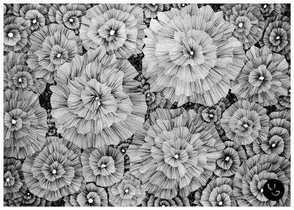 Ixotype - Blog - Líneas con arte -  Vasilj Godzh
